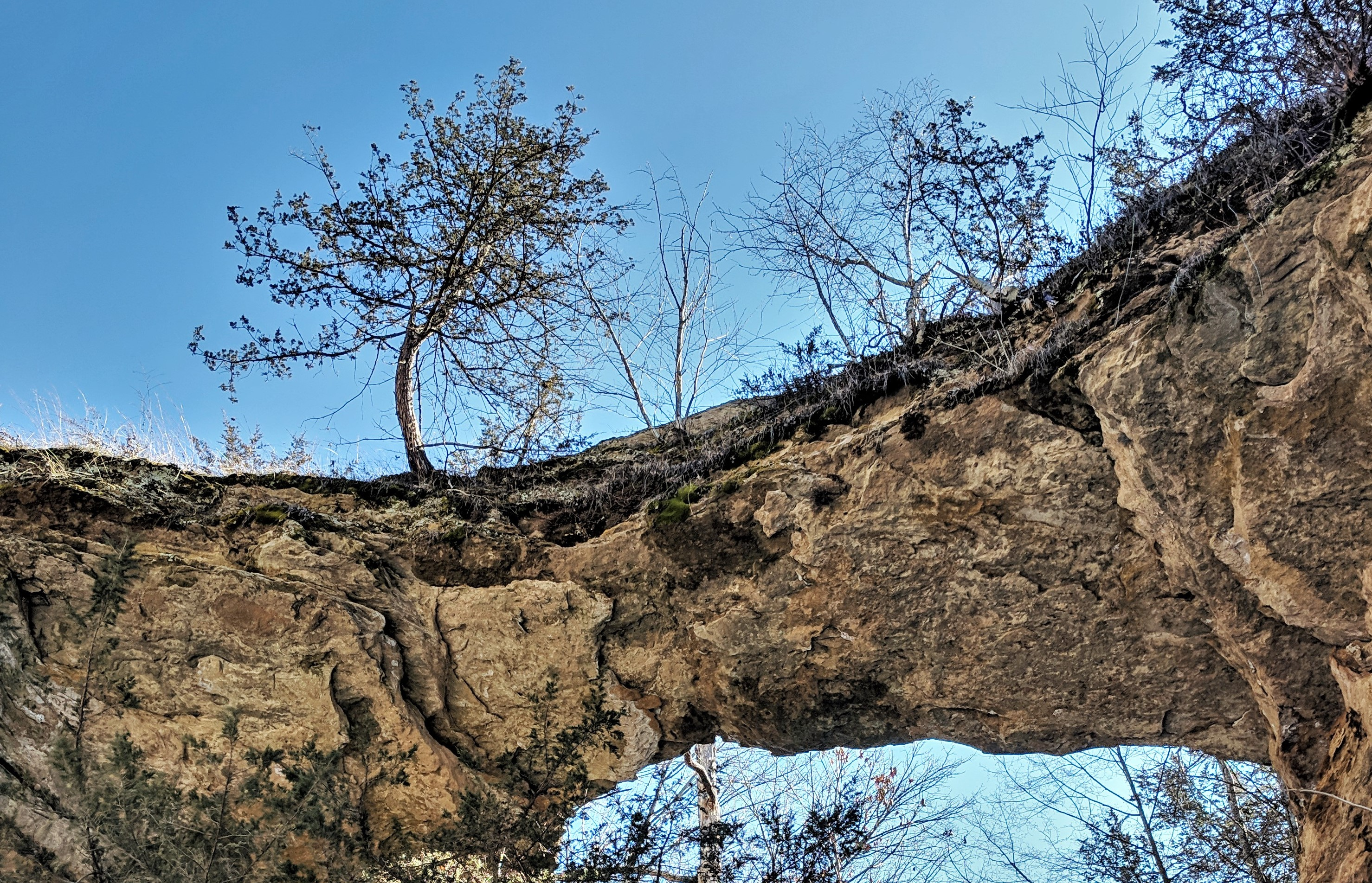 Natural bridge with tree